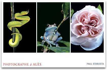 Photographe animalier STAROSTA Paul